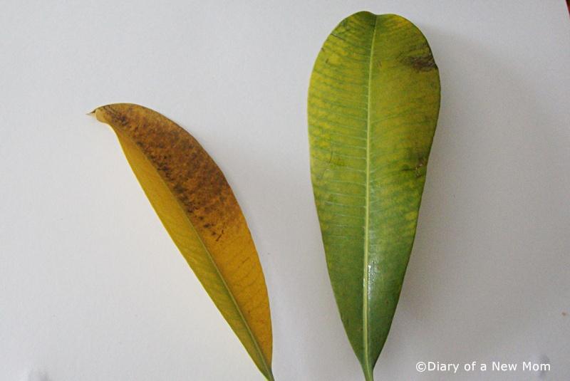 Leaf-printing
