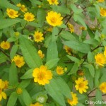 Pretty Flowers in Yellow