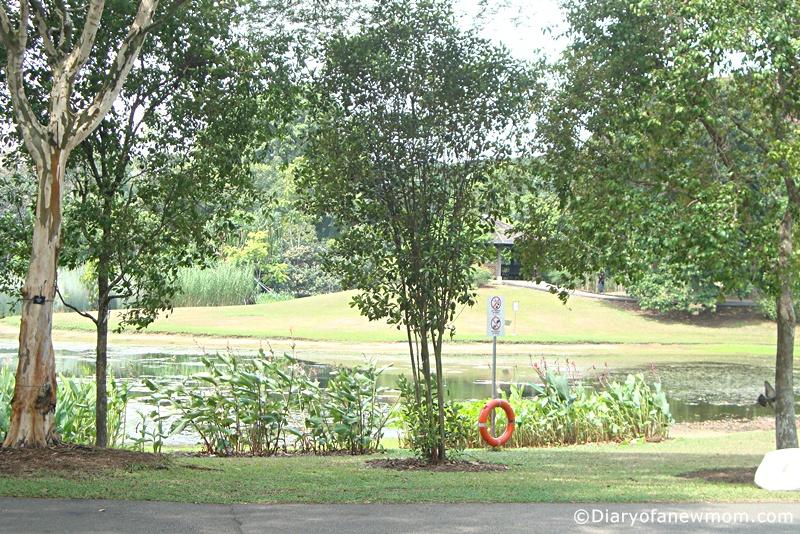 Eco Lake at the Singapore Botanic Gardens