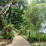 Beautiful Landscapes from Singapore Zoo