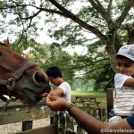 Feeding the Horse at Animal Resort – Singapore