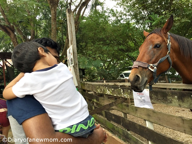 Animal Resort-Singapore