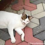 Neighborhood Cat Watch #WordlessWednesday
