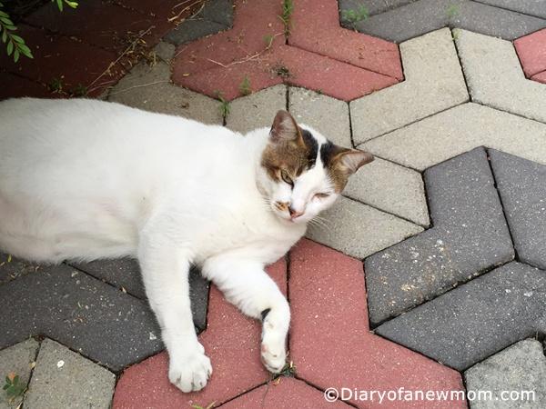 Neighborhood Cat Watch