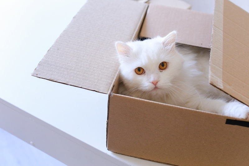 Repurpose Old Cardboard Boxes