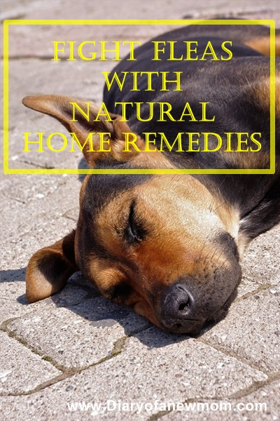 Fight Fleas with Natural Home Remedies