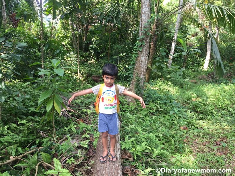 Field Trip around the Home Garden