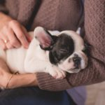 8 Natural Products to Help Calm Your Dog's Anxiety