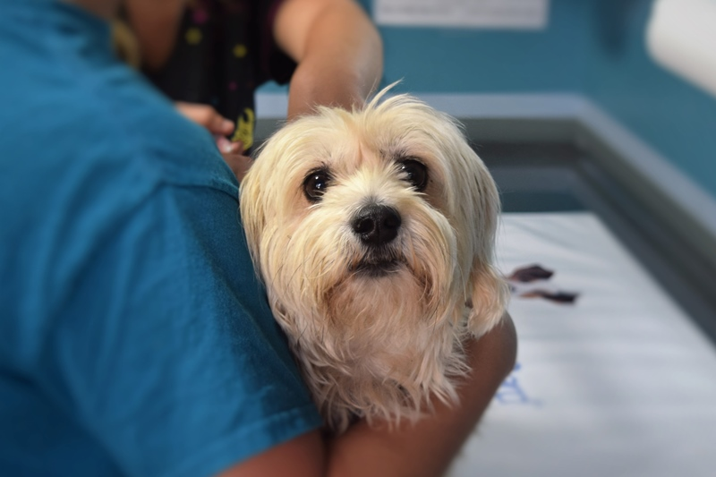 diseases that can risk your pet's health