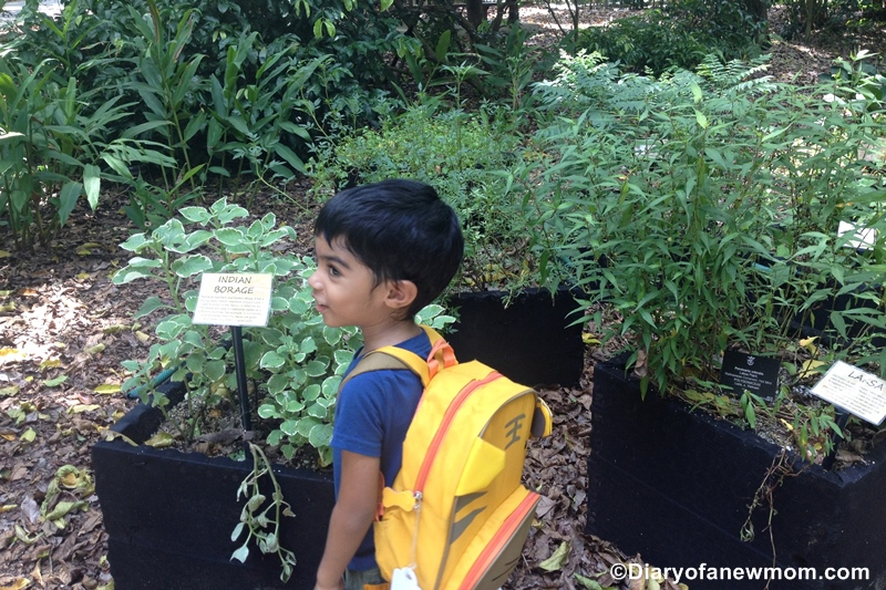Lessons Children Learn From Gardening