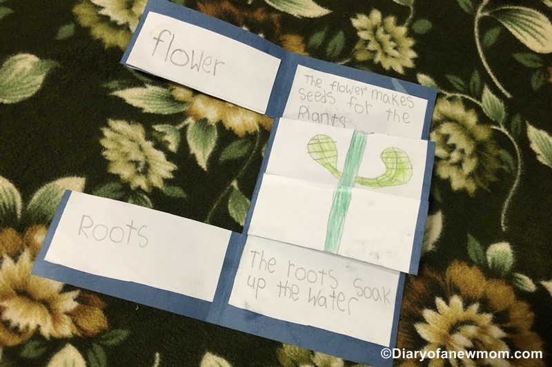 Parts of a Plant Craft