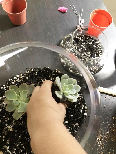 planting-succulents