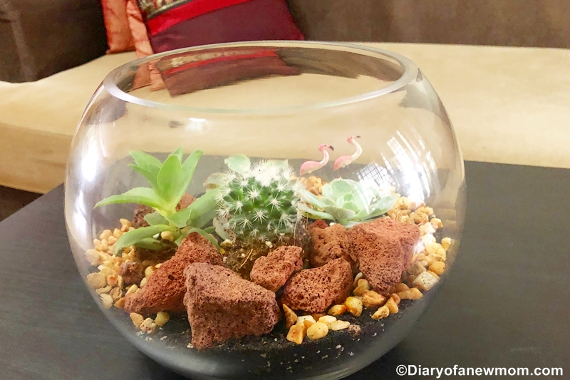 How to make a terrarium with succulents