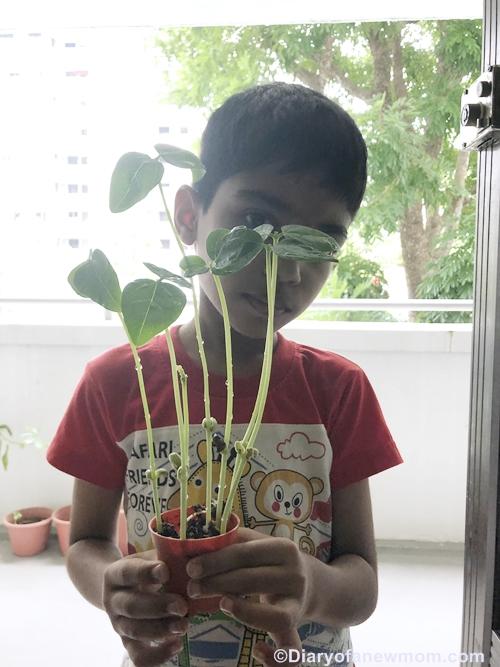 microgreens-Singapore