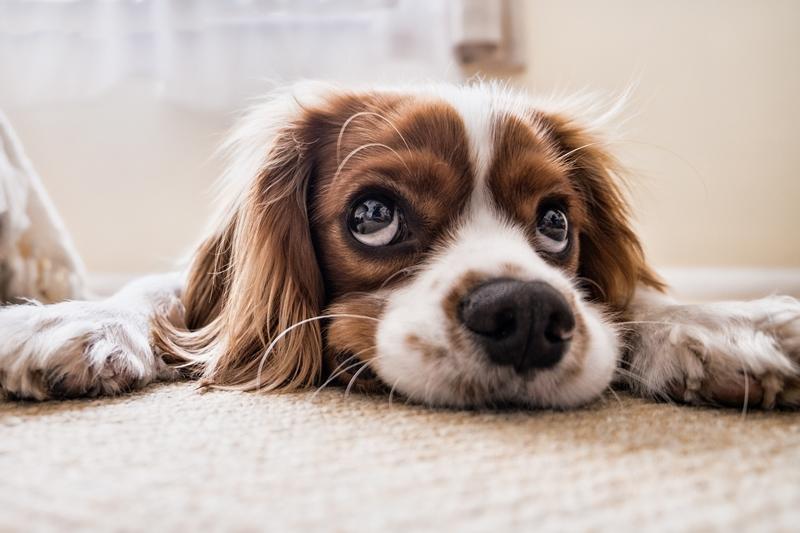 How You Can Treat Foul Dog Breath